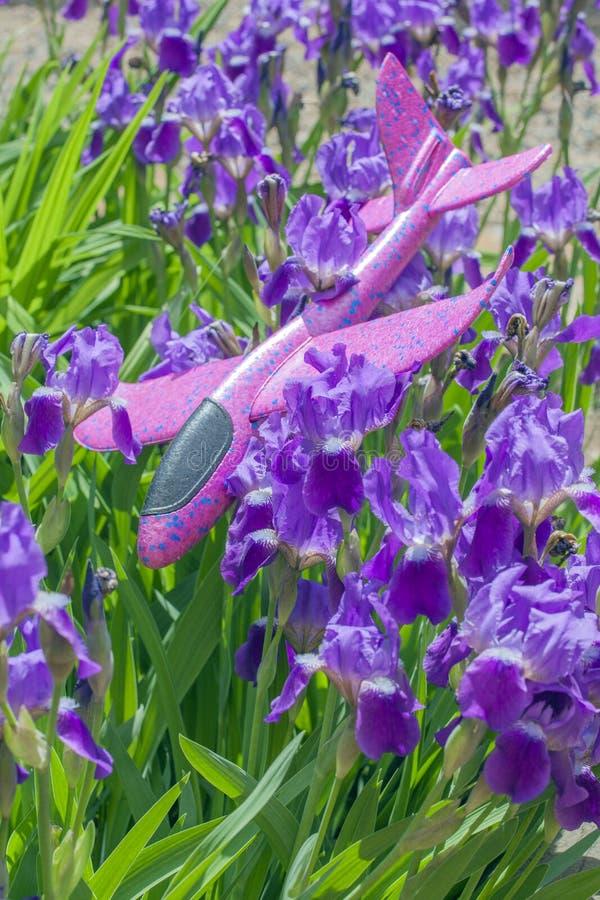玩具飞机紫色虹膜花背景 图库摄影