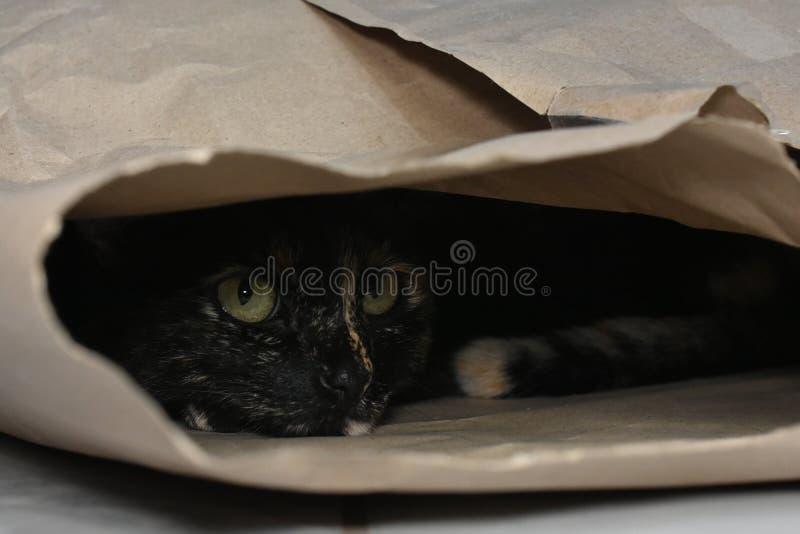玩在纸板袋子里面的猫捉迷藏 免版税库存图片