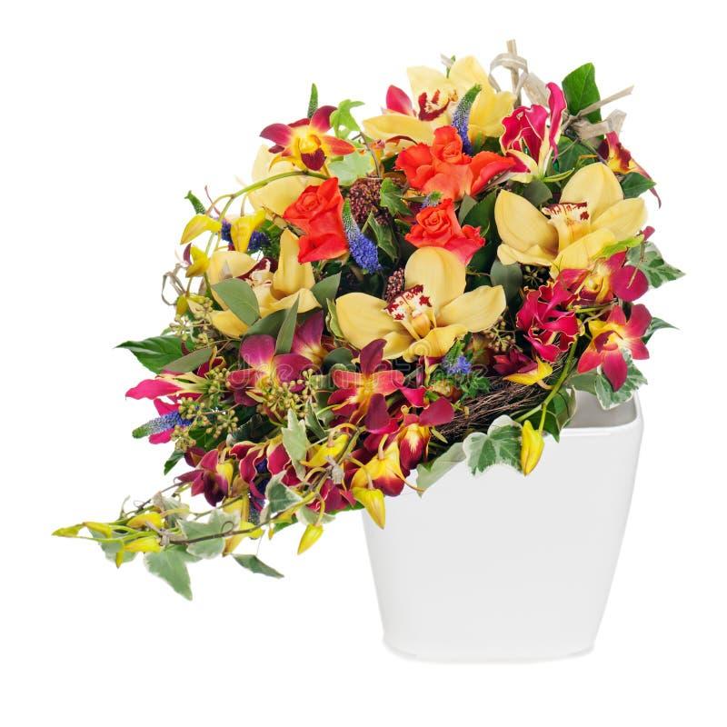 丁香,特写和花香五颜六色的百镜头.玫瑰,兰花虹膜.梦到丁香花图片