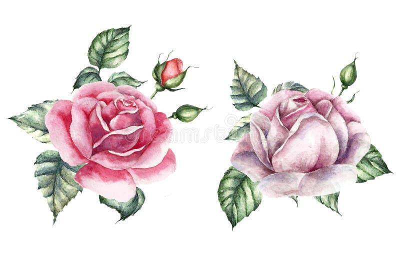 玫瑰元素集 水彩喜帖 库存例证