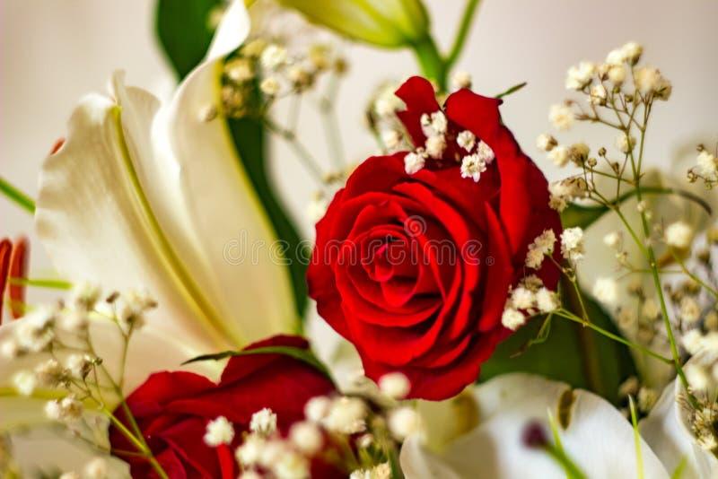 玫瑰和百合欢乐花束在红色和白色颜色 库存图片