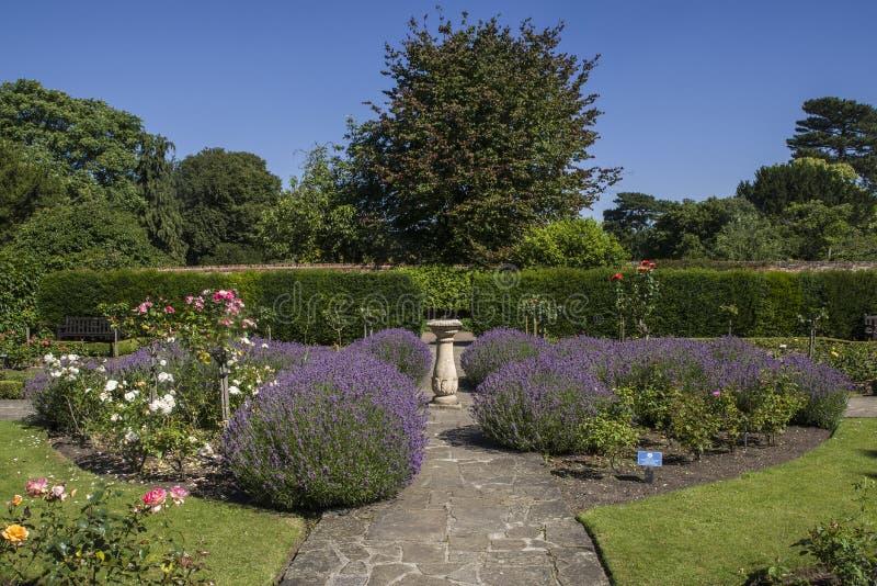 玫瑰园在修道院庭院里,埋葬St埃德蒙兹 库存图片