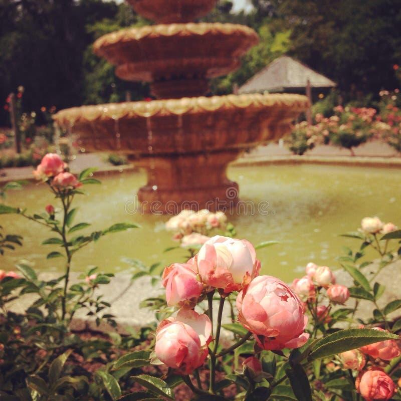 玫瑰园 免版税库存照片