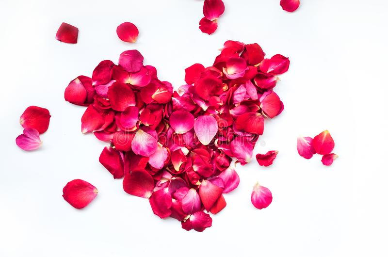 玫瑰在白色的花瓣心脏 免版税库存图片
