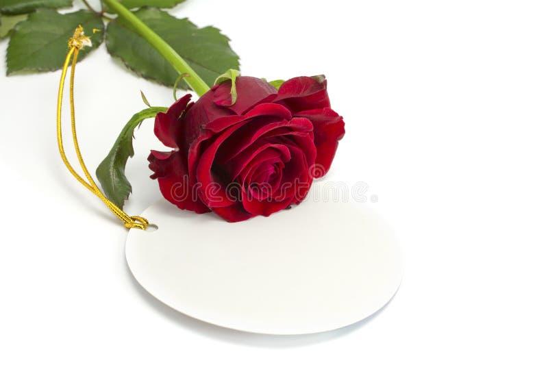 玫瑰在看板卡位于 免版税库存图片