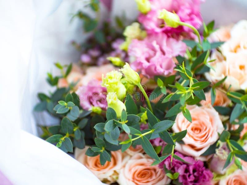 玫瑰开花作为与被弄脏的bokeh的光滑和软,桃红色口气问候的或婚礼或者有选择性请帖的背景 库存照片