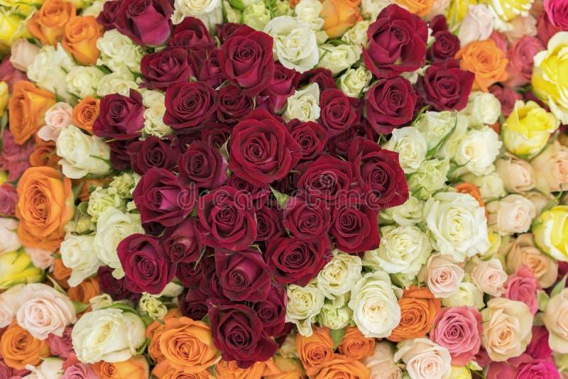 玫瑰明亮的多彩多姿的花束  多彩多姿的新鲜的玫瑰背景 大量五颜六色的明亮的玫瑰关闭  库存照片