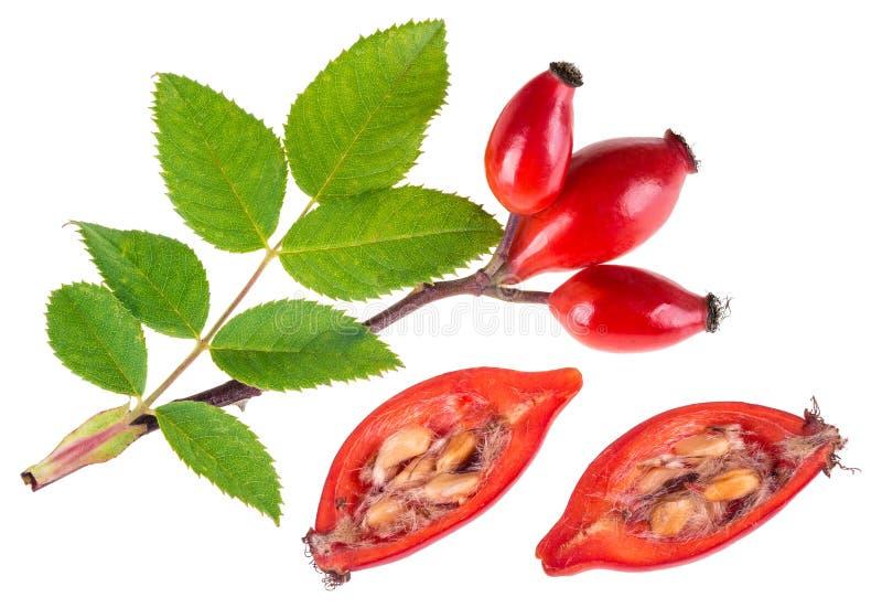 玫瑰果和红色的枝杈对分了野玫瑰果 canina罗莎 库存图片
