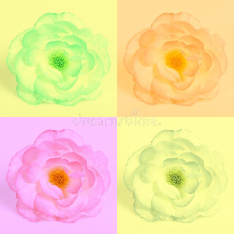 玫瑰的四个不同颜色版本 库存例证
