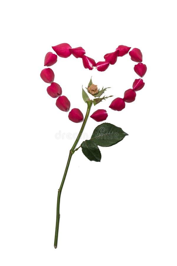 玫瑰的瓣在心脏形状被安排 库存照片