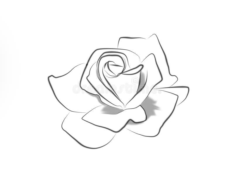 玫瑰的线描 向量例证
