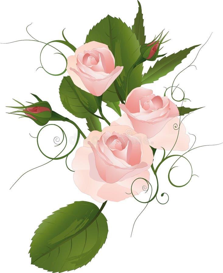 玫瑰的花束 向量例证
