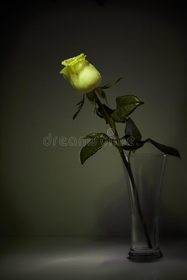 玫瑰的阴影在暗室 仍然1寿命 图库摄影