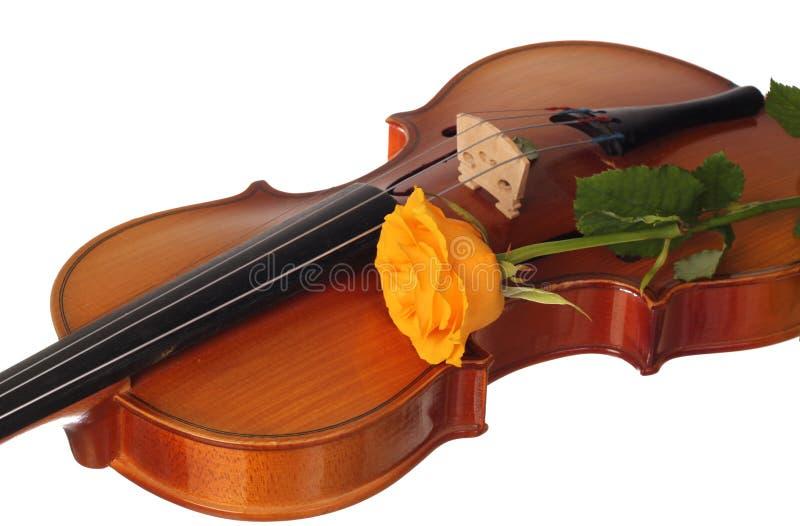 玫瑰色小提琴黄色 免版税库存图片