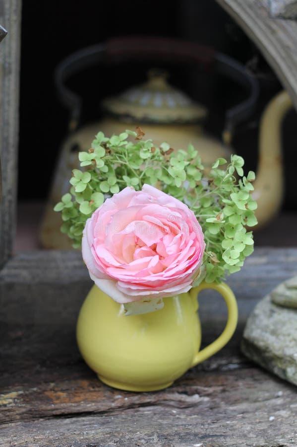 玫瑰色破旧的在黄色罐的别致和八仙花属有葡萄酒咖啡罐的 免版税图库摄影