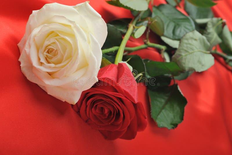 玫瑰色缎二 库存图片