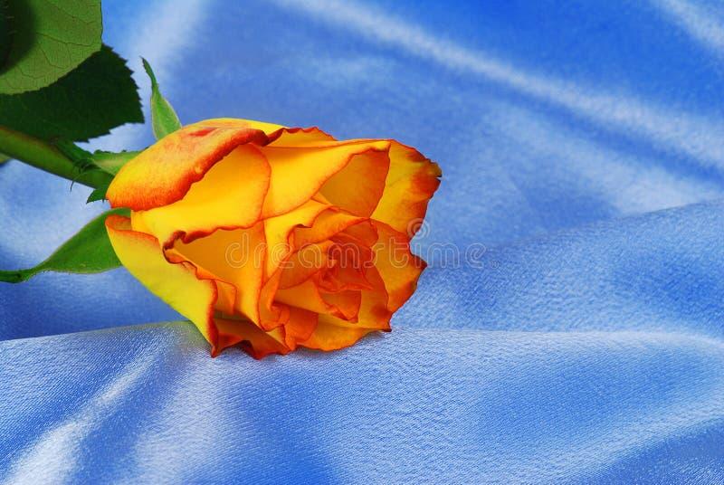 玫瑰色缎 库存照片