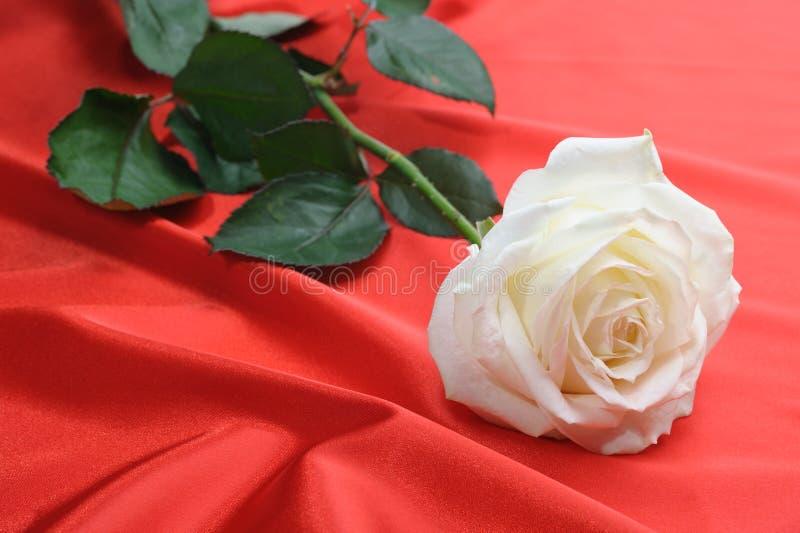 玫瑰色缎 免版税图库摄影