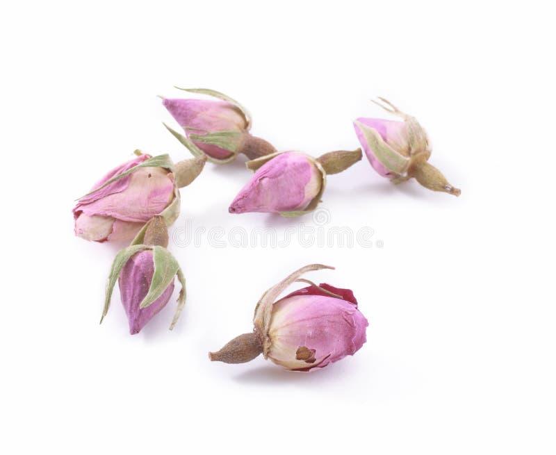玫瑰色茶 库存图片