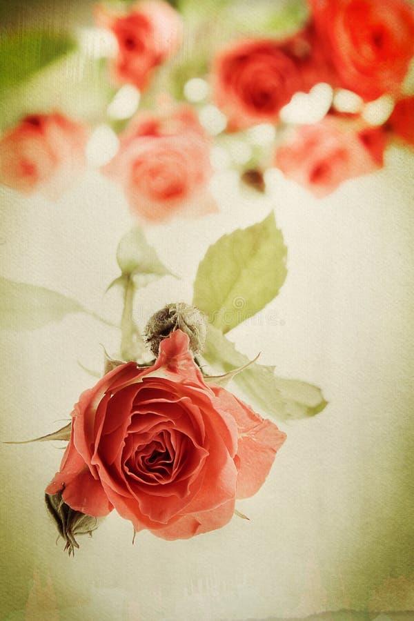玫瑰色葡萄酒 免版税库存图片