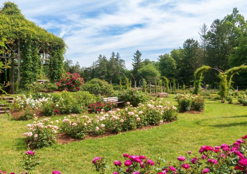 玫瑰花坛和眺望台在伊丽莎白公园 免版税库存照片
