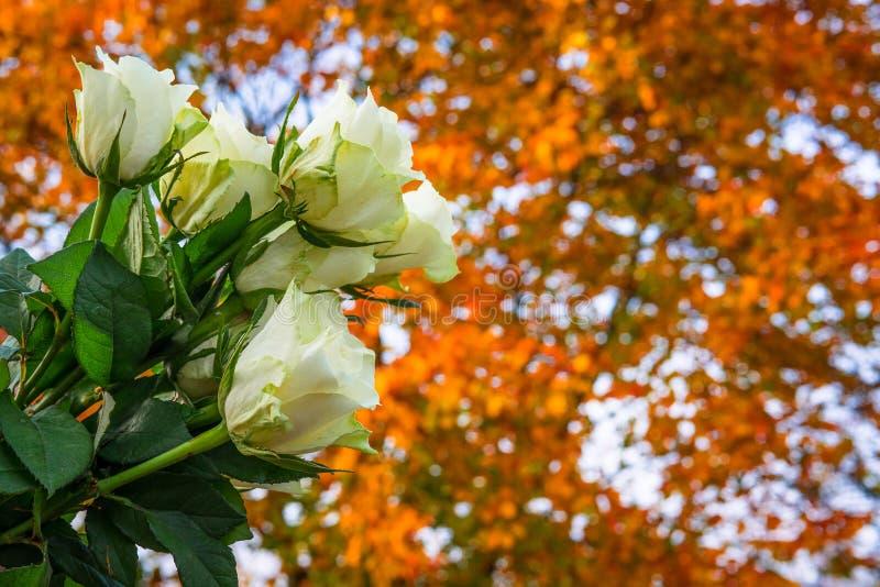玫瑰花束在秋天 库存图片
