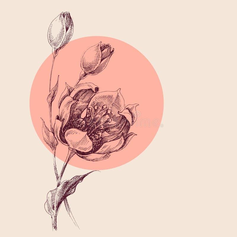 玫瑰花束手图画 向量例证