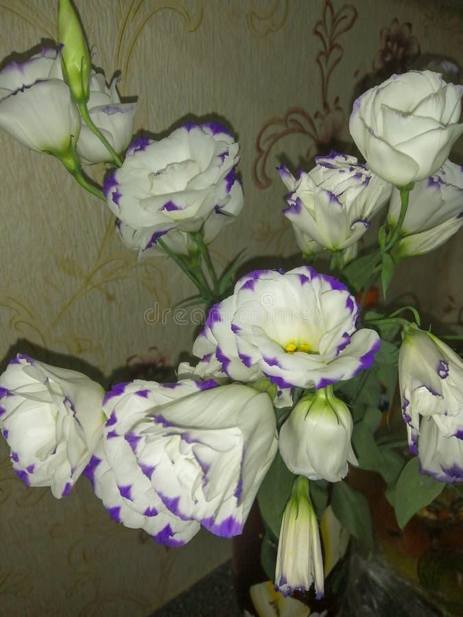 玫瑰花束  图库摄影