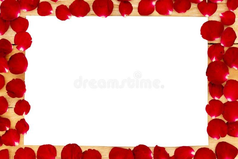 玫瑰花瓣在一个白色框架安排了 库存图片