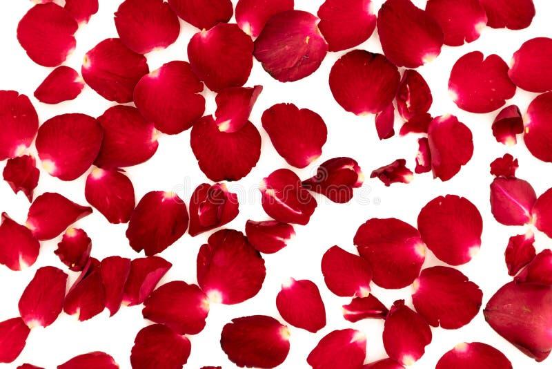 玫瑰花瓣在样式安排了 免版税库存照片