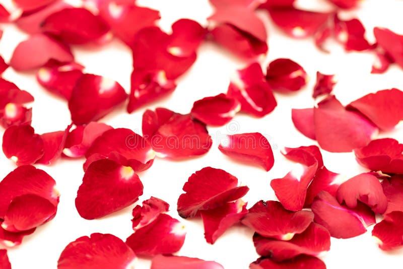 玫瑰花瓣在样式安排了 免版税库存图片