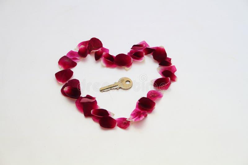 玫瑰花瓣被塑造象心脏 库存图片