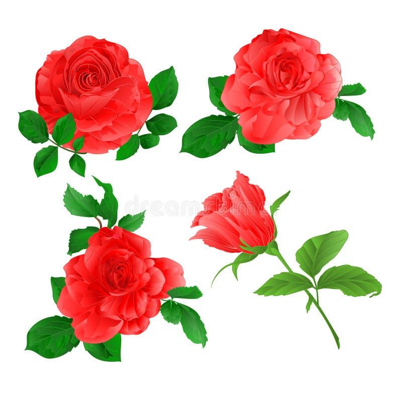 玫瑰设置了有叶子水彩集合的四桃红色枝杈在一个白色背景葡萄酒传染媒介例证编辑可能 皇族释放例证