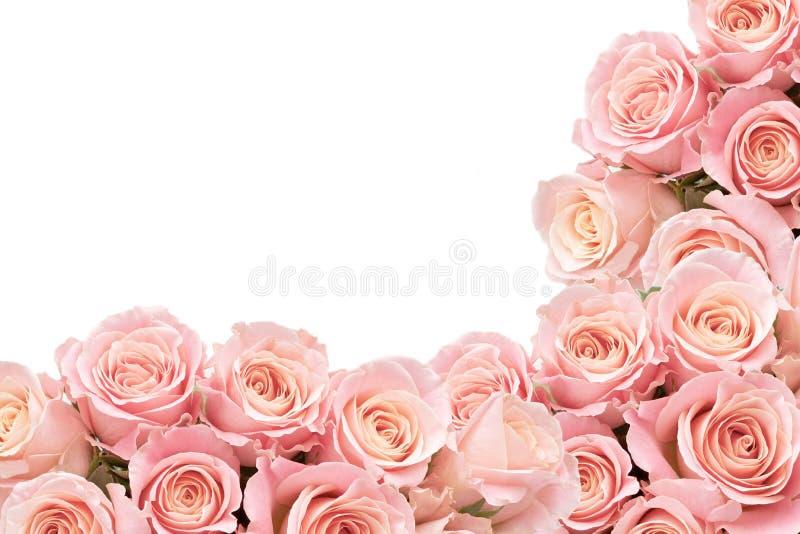 玫瑰边界与空间的文本的 免版税库存照片