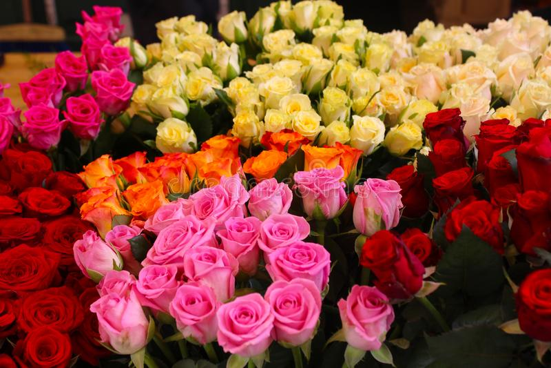 玫瑰,不同的颜色花束  免版税库存照片