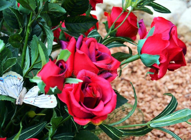 玫瑰 桃红色玫瑰和绿色叶子,自然图象 库存图片