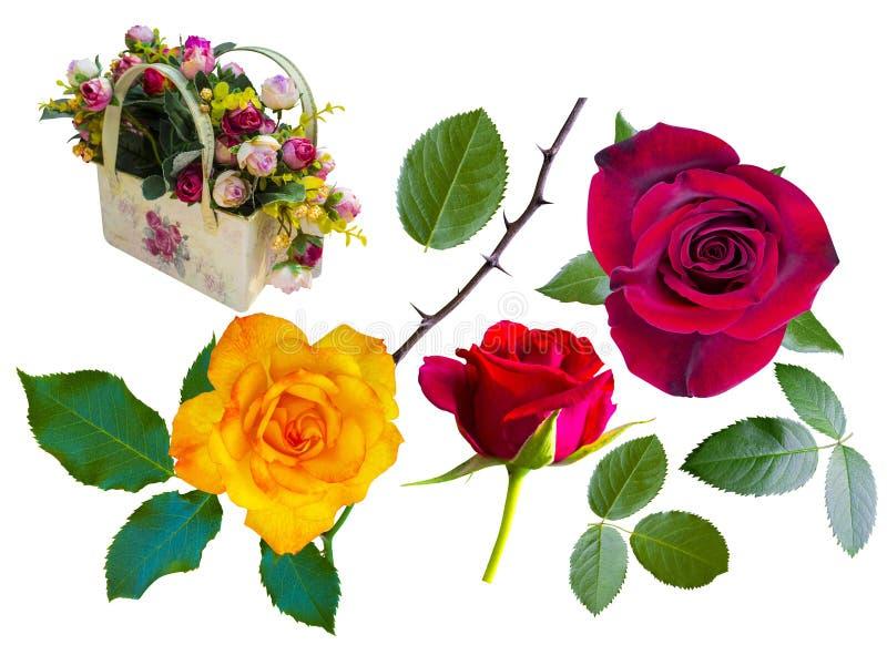 玫瑰 红色玫瑰 黄色玫瑰 与玫瑰的篮子 免版税库存照片
