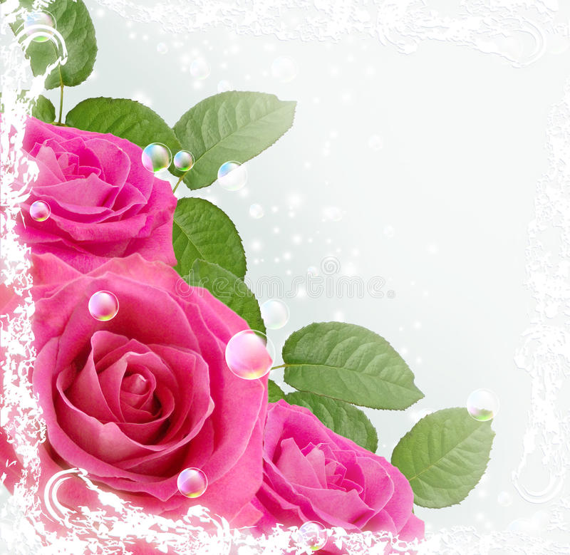 Download 玫瑰 库存例证. 插画 包括有 叶子, beautifuler, 粉红色, 绽放, 室外, 结算, 起泡的 - 22351724