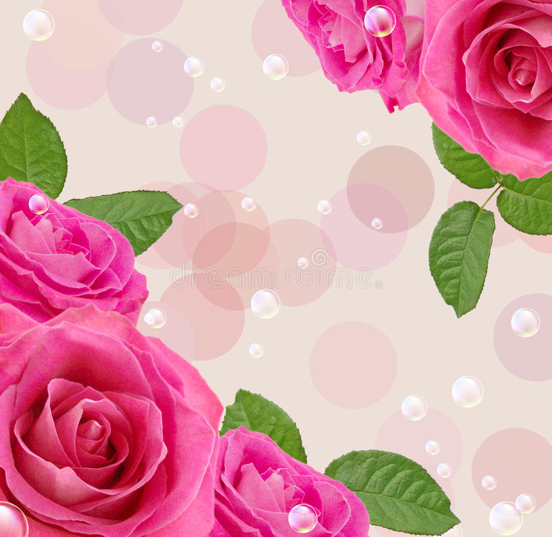 Download 玫瑰 库存例证. 插画 包括有 起泡的, 本质, 春天, 绽放, 抽象, 背包, 季节, 斑点, 花卉, beautifuler - 22351728