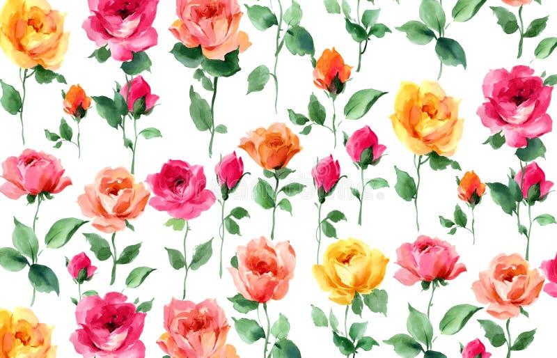 玫瑰nd玫瑰色芽水彩绘画  库存例证
