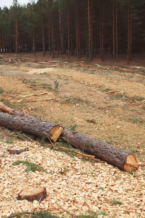 环境、自然和砍伐森林森林概念-砍伐树在森林 免版税图库摄影