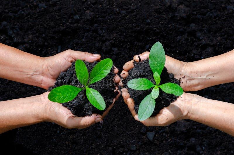 环境世界地球日在生长幼木的树的手上 在自然领域的Bokeh绿色背景女性手藏品树 图库摄影