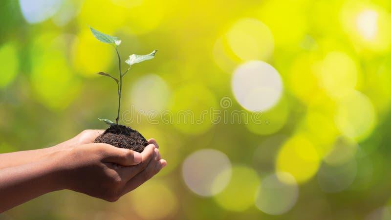 环境世界地球日在生长幼木的树的手上 在自然领域草的Bokeh绿色背景男性手藏品树 免版税图库摄影