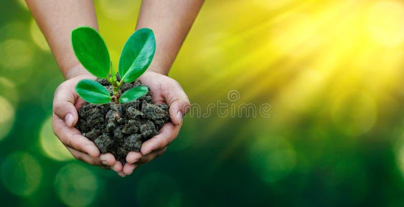 环境世界地球日在生长幼木的树的手上 Bokeh绿化拿着在自然领域gra的背景女性手树 免版税库存图片