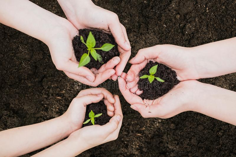 环境世界地球日在生长幼木的树的手上 Bokeh绿化拿着在自然领域gra的背景女性手树 免版税库存照片