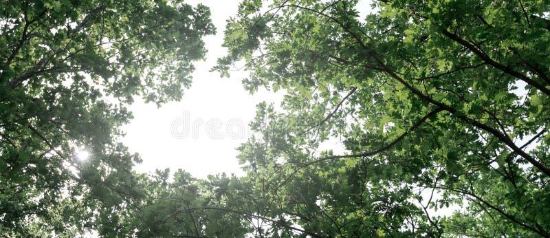 环境友好的空运概念 飞机在天空飞行以绿色树为背景 危机生态学环境照片污染 免版税库存图片