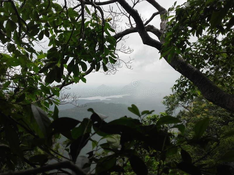 环境斯里兰卡36525596 库存图片