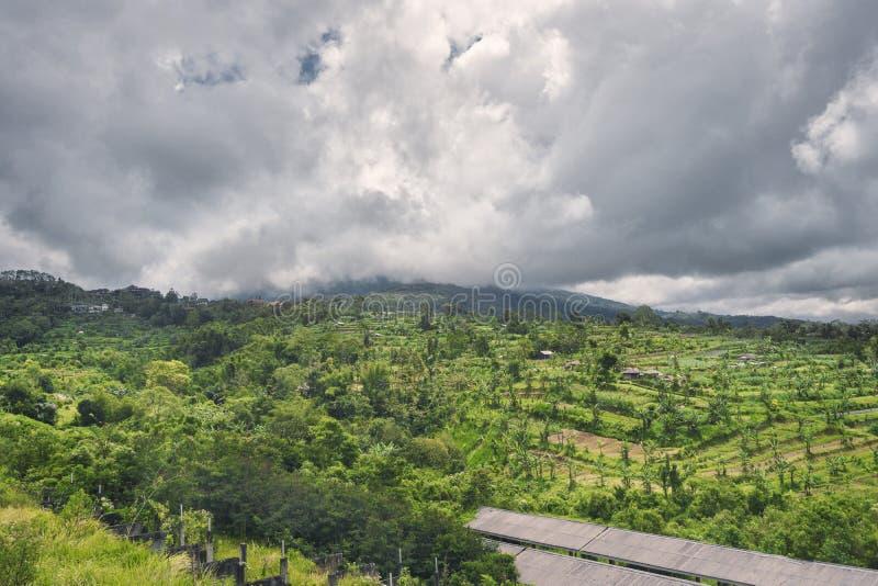 环境美化与与棕榈树的绿色充满活力的米与重的云彩的大阳台和山 免版税库存照片