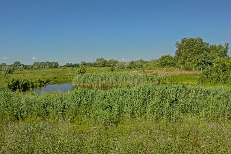 环境美化与与沼泽的晴朗的绿色在Kalkense Meersen自然reerve,富兰德,比利时的领域和树 免版税库存照片