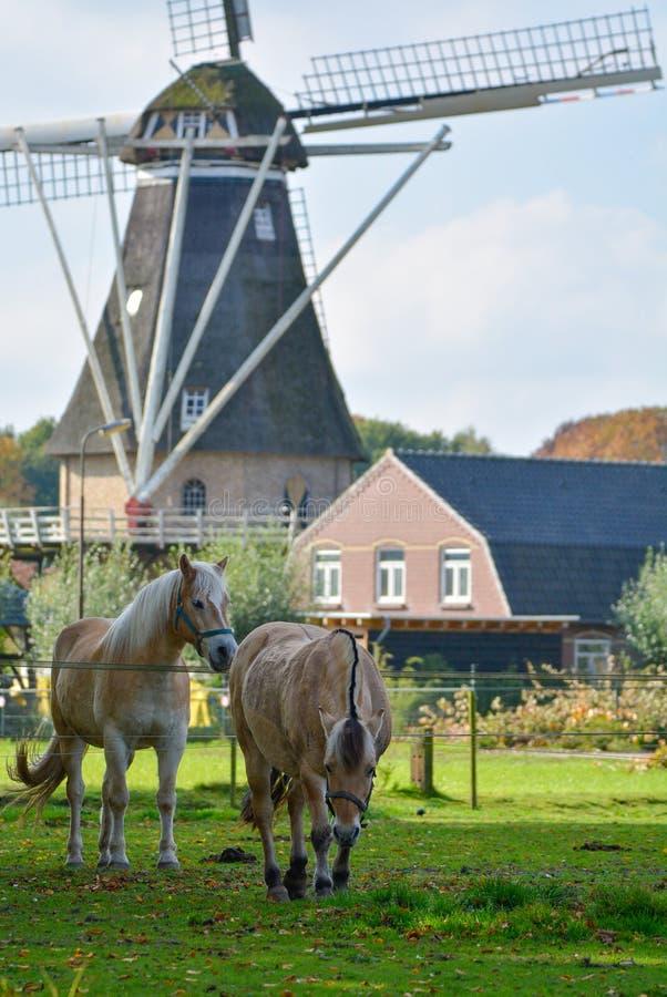 环境美化与传统荷兰五谷风车和两匹马 免版税库存图片